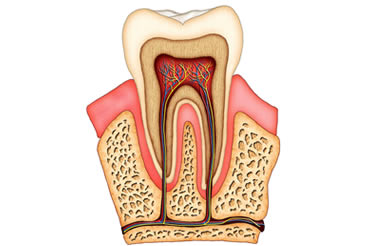 treatments page root canal treatment_mini